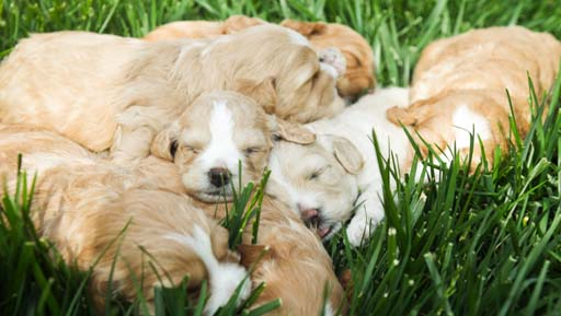 Puppies laying in a comfy pile
