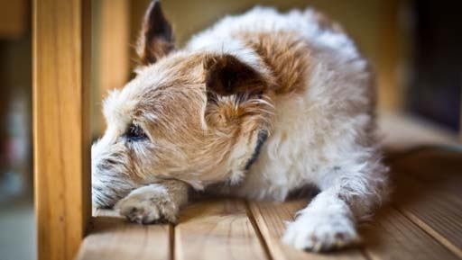 Senior Pet Care at Sacramento Animal Hospital